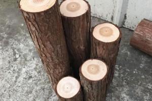 杉木桩开裂的外在因素有哪些及如何预防开裂?