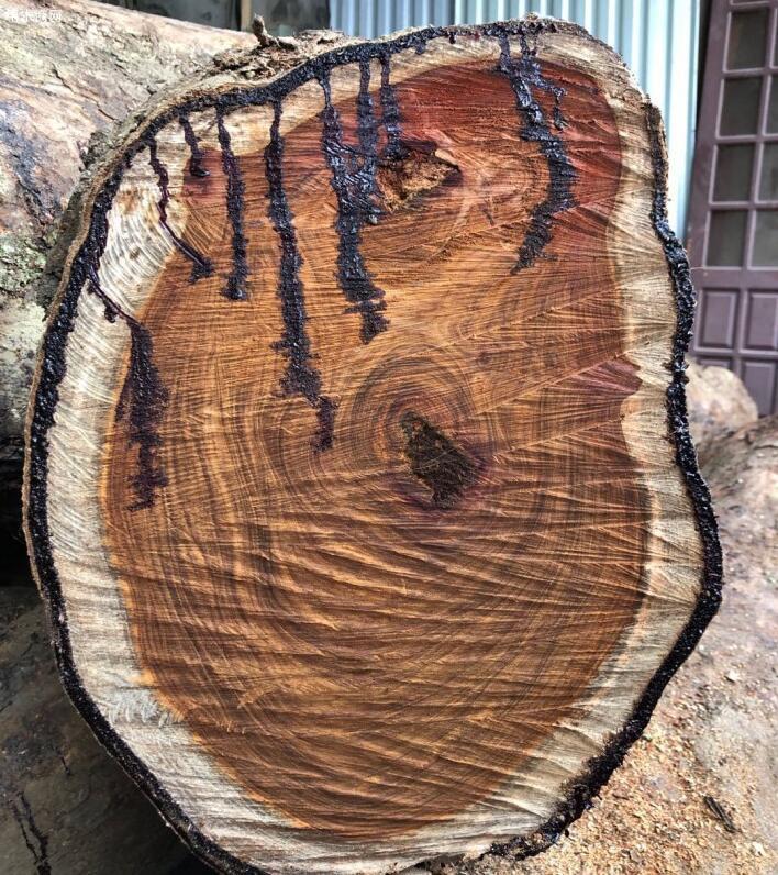 越南黄花梨木原木价格多少钱一斤图片