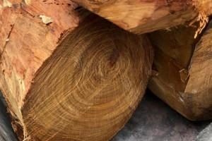 越南黄花梨木原木价格多少钱?