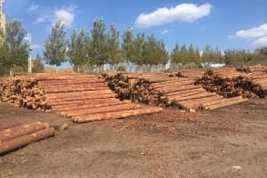"""木材进口加工成绥芬河口岸发展""""顶梁柱"""""""