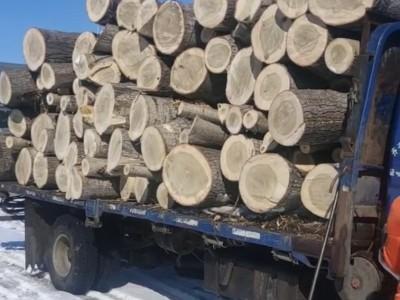 有杨树原木木材批发