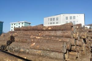 俄罗斯红松原木纯天然木材