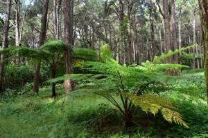 提升热带非洲的森林认证
