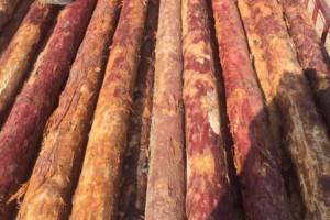 2020年俄远东已发现的木材走私超1亿人民币