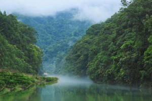 广西森林覆盖稳居全国第三木材产量稳居全国第一