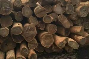 巴拉圭绿檀车圆原木价格15000元/吨