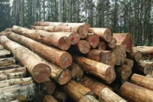 海关总署针对禁止澳大利亚原木进口再发通告