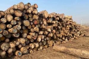 长期供应欧洲云杉原木