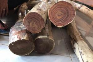 关于越南黄花梨究竟是什么木材的相关介绍?