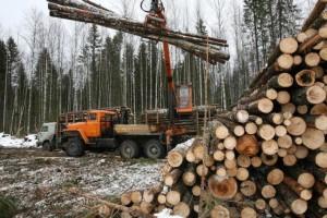 约4亿美元非法木材从俄罗斯流入欧洲