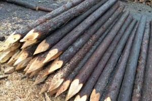 江苏杉木桩批发价格多少钱一根?