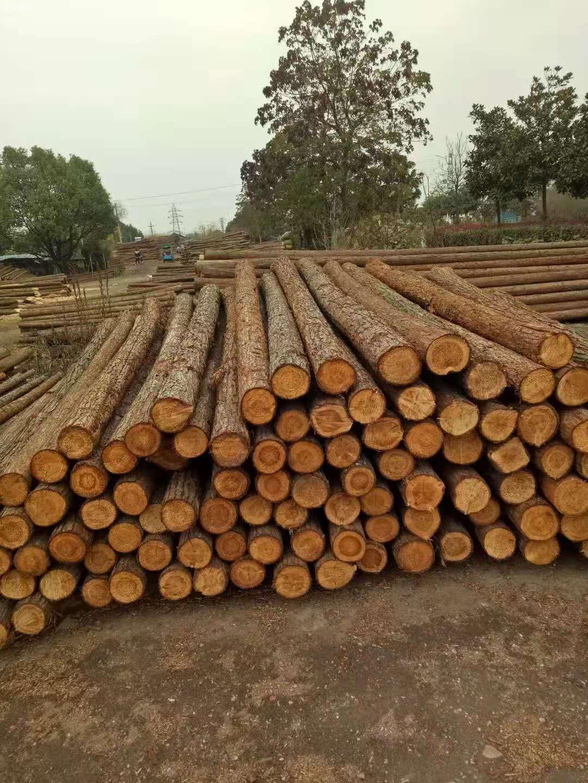 上海杉木桩批发价格多少钱一根品牌