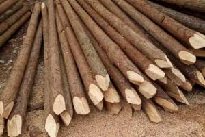 河道杉木桩有哪些优点及杉木桩应该怎么打桩施工?