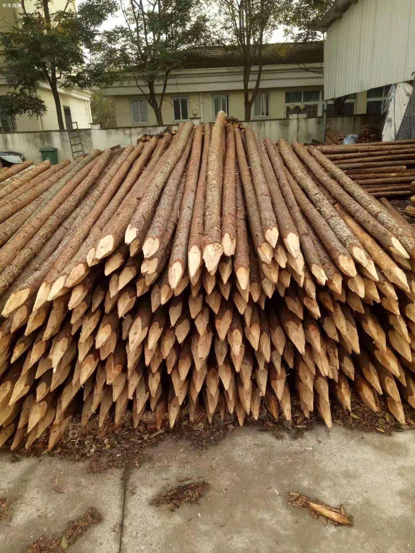 杉木做木桩会腐烂发霉吗及杉木桩防腐处理方法图片