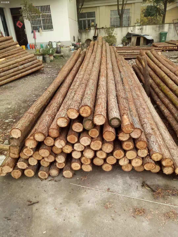 杉木做木桩会腐烂发霉吗及杉木桩防腐处理方法批发