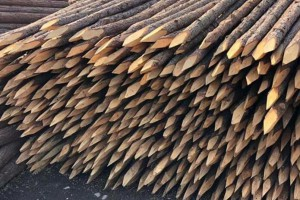 上海杉木桩批发价格多少钱一根?