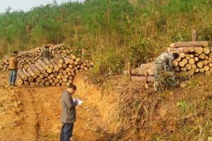 湖北省麻城市林业局开展木材收购经营突击检查