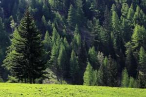 俄罗斯FSC认证森林面积增加16%