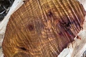 新冠疫情期间越南成为主要木材出口国之一