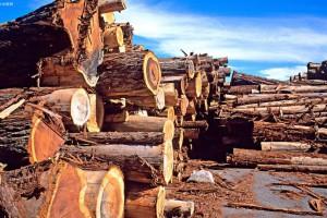 福建三明市简化木材采伐审批程序