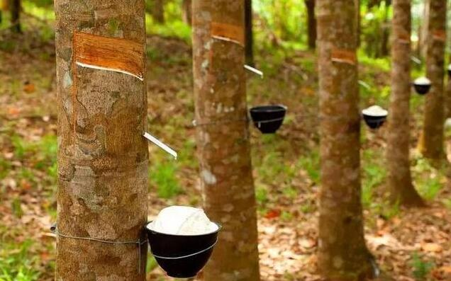 橡胶木的加工特点及橡胶木实木家具的优缺点