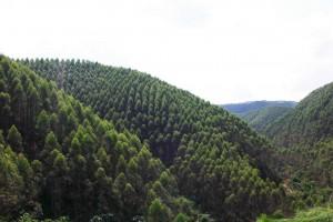 广西林业产业生产总值破7500亿