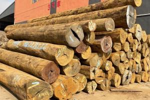 所罗门大叶紫檀是什么木材及木材性格怎样?