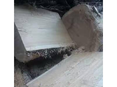 边境原木专业生产批发枫木板材,质优价廉