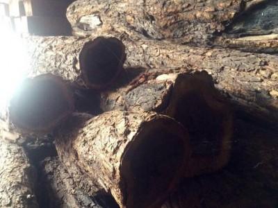 非洲进口正宗爱里古夷苏木(黑檀)西非乌木原木现货出售