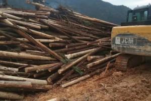 杉木原木原产地直销