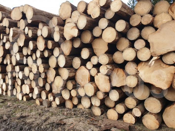 樟子松, 欧洲云杉原木价格行情持续增加