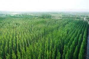 菏泽市林业局多举措推进绿色林业发展工作成效显著