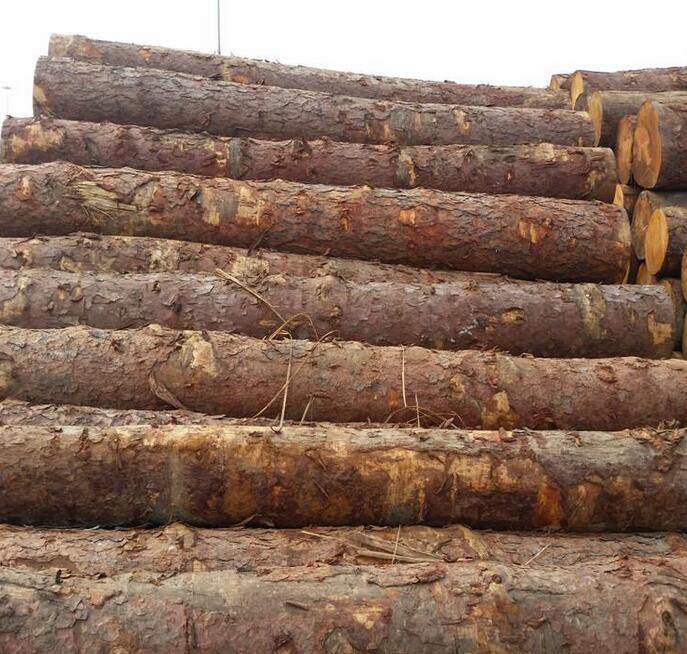 中国进口芬兰原木价格行情