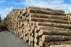 新西兰出口原木约占全国总产量的65%