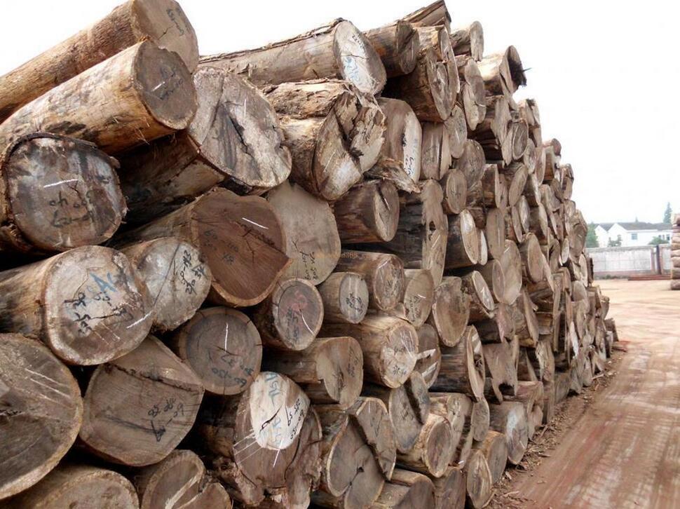 鸡翅木是什么树的木头品牌