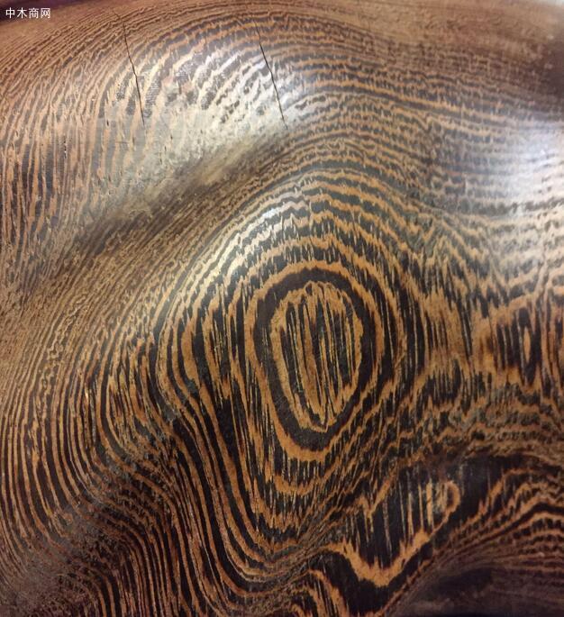 鸡翅木是什么树的木头图片