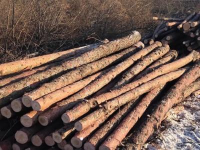 大连煤矿用坑木落叶松原木批发