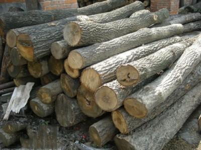 坑木硬木批发