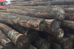 近期广东木材市场陆续有南方松新货到港