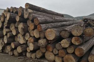 31家在罗马尼亚从事木材销售活动的公司因垄断被罚