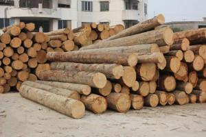我国对自新西兰进口部分木材纸制品实施零关税