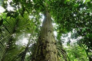 沉香树是什么树,可在哪种植?