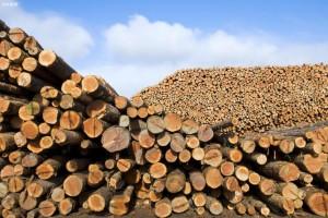 2020年度中国原木进口量为5975万立方米