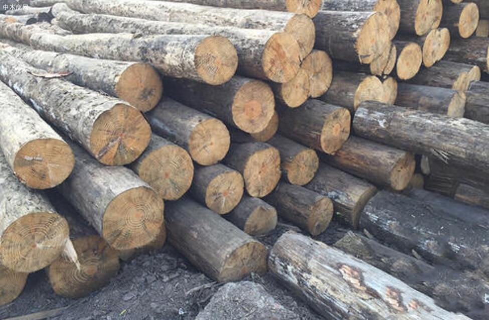 今日最新南方松木价格行情走势