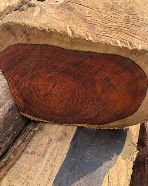 酸枝是什么木头?红木的红酸枝与黑酸枝价格排名,学名及俗称对照供应商