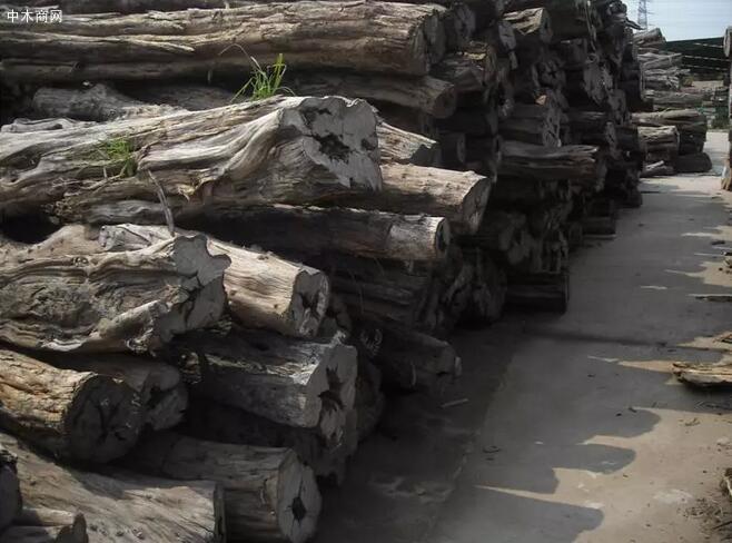 酸枝是什么木头?红木的红酸枝与黑酸枝价格排名,学名及俗称对照批发商
