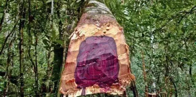 酸枝是什么木头?红木的红酸枝与黑酸枝价格排名,学名及俗称对照采购