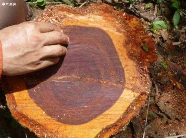 酸枝是什么木头?红木的红酸枝与黑酸枝价格排名,学名及俗称对照价格