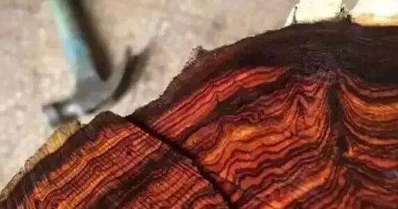 酸枝是什么木头?红木的红酸枝与黑酸枝价格排名,学名及俗称对照图片