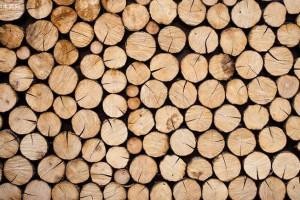 木材种类有什么意思?